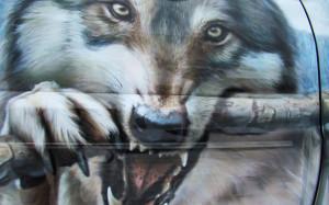 волки4